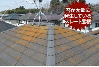 苔が大量に発生しているスレート屋根