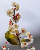 令和の典拠となった万葉集序文「初春の「令」月にして気淑く風「和」らぎ、梅は鏡前の粉を披き、蘭は珮後の香りを薫す。」