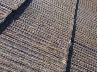 屋根材のカビ類