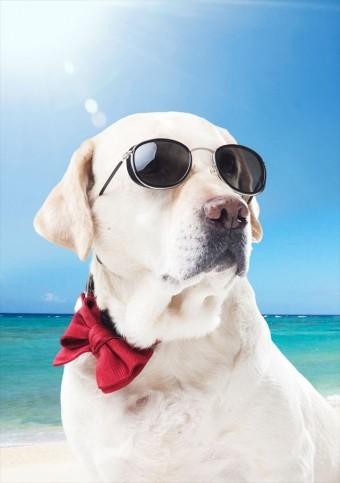 UVカット商品で紫外線を遮断して体も屋根も外壁も守ってください