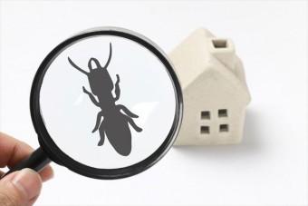 雨漏りで湿気た木材にはシロアリがたかり、知らぬ間に家の強度が落ちてしまいます