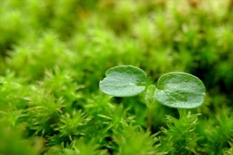 屋根の上の苔をあまり過敏になりすぎないで良い。ここまでの苔が生えたら対策を考えたい