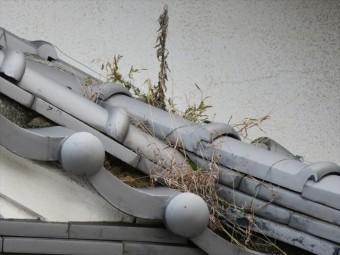 瓦屋根では種子が発芽して草が生えることがある