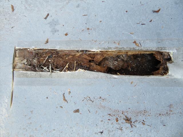 割れたFRP防水層を放置すると下地のコンパネが腐食します