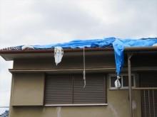 茨木市で地震の被害に遭ったお宅の屋根をブルーシートで雨漏り養生していたところへ台風21号が通過したことで、無残にも土嚢袋は落ち、ハトメがちぎれて剥がされた。