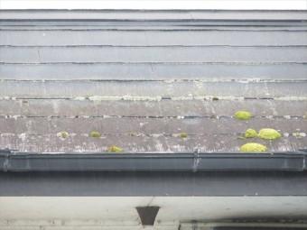 屋根の上は植物や苔、藻類が繁殖しやすい環境です