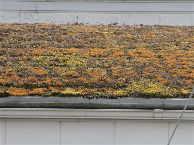 屋根に植生があっても健康被害は起こらない