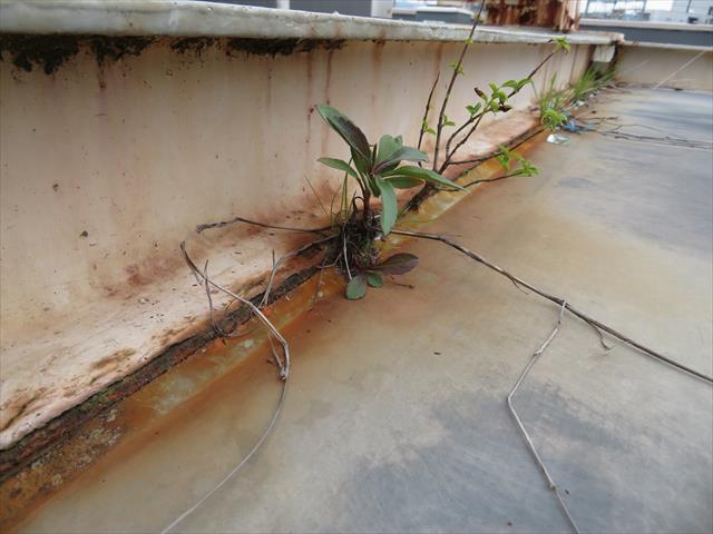 屋上に設置された高架水槽の架台付け根と塩ビシート防水の境界は草が生えやすい場所のひとつ