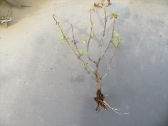 陸屋根や屋上に生えた草は木のレベルのものもあり、根が塩ビシートやウレタン防水を突き破っている場合がある