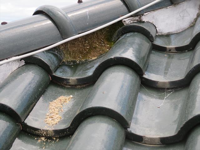 瓦屋根の場合は面戸漆喰が剥がれ葺き土が流れ出ると軒樋を摩擦で穴を開けることがある