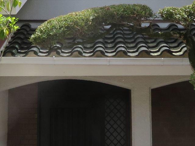軒先の雀口の漆喰は防水効果の他に鳥獣や昆虫類が家屋へ侵入することを防ぐ役割もある