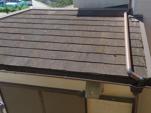 こんな小範囲の屋根にも苔が生えています。苔が生育する要件が揃っているから生えているのです。