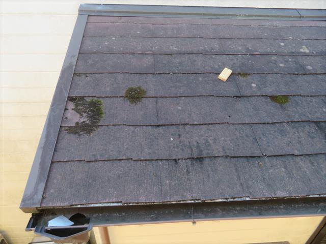 苔が生えている場所は、カラーベストが張り継がれた境界部分であることが写真から解ります。