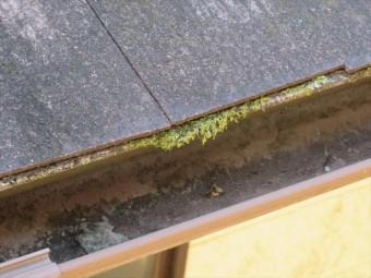 カラーベストとカラーベスト、カラーベストと板金の、屋根材を張り継ぐ接点に苔が生えている