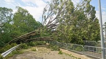 台風21号は多くの街路樹をなぎ倒し、幹線道路は通行不能になりました。