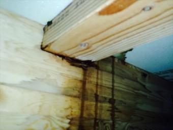 雨漏りは柱や梁、桁などの家の躯体を弱めてしまいます。