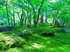屋根の苔が成長を進めるために必要な光合成3要件をバランスよく満たす場所に苔が生える